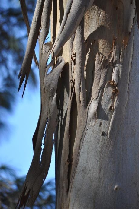 A beleza dos troncos