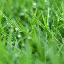 Os benefícios de um bom gramado