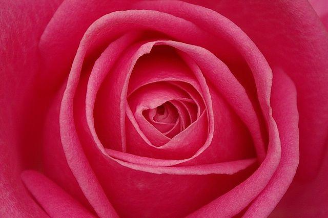 Dia dos Namorados deve aumentar em 30% a venda de flores