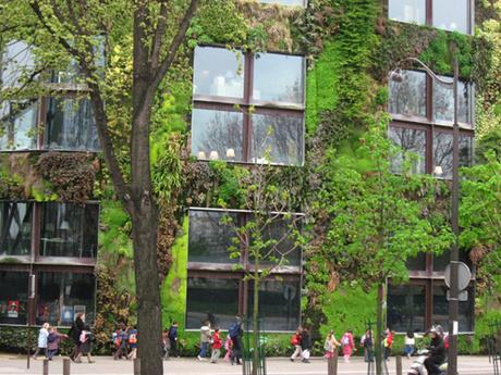 Jardim vertical, uma opção para os grandes centros urbanos e para a sua casa