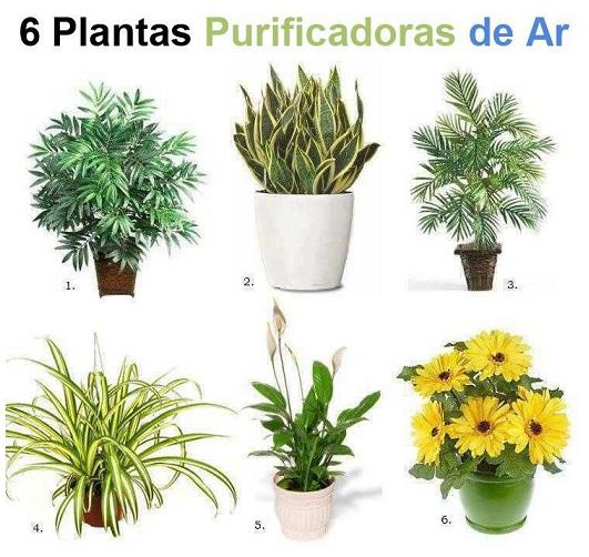 Conhe a seis plantas que purificam o ar jardim cor - Plantas de exterior baratas ...