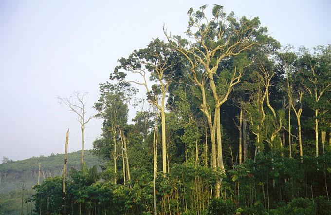 As árvores na amazônia são menos vulneráveis