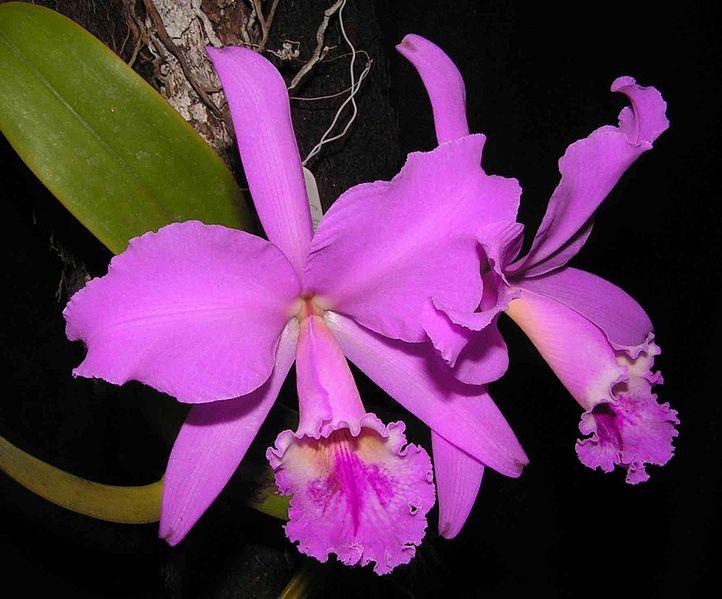 O fabuloso mundo das orquídeas