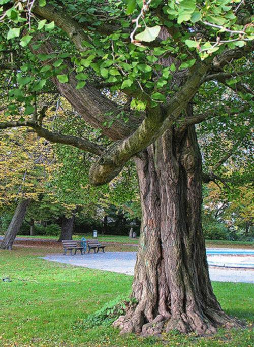 Árvores, símbolos e curiosidades