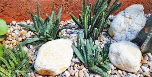 Pedras no jardim