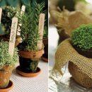 As ervas aromáticas e o equilíbrio ambiental