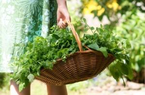Homeopatia Vegetal – parte 3