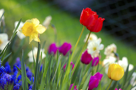 Flores, cores e aromas