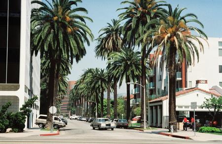 palmeira-das-canárias em Beverly Hills