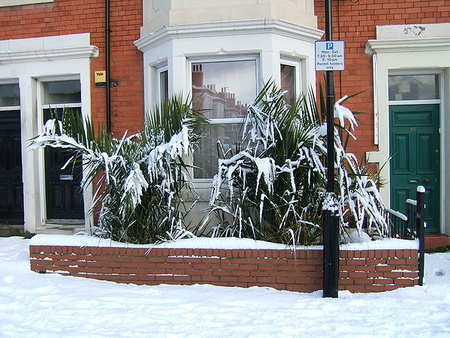 suportando a neve