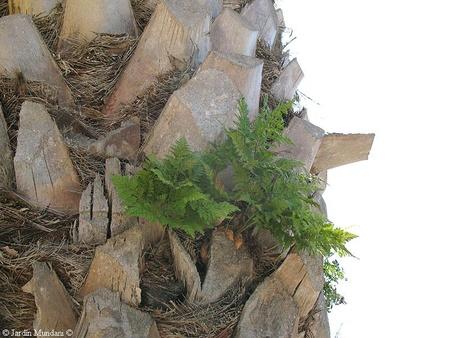 tronco da palmeira com epífitas