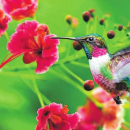 Para atrair beija-flores