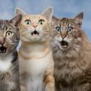 Como espantar o gato do vizinho