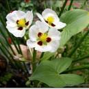 Flores que atraem libélulas