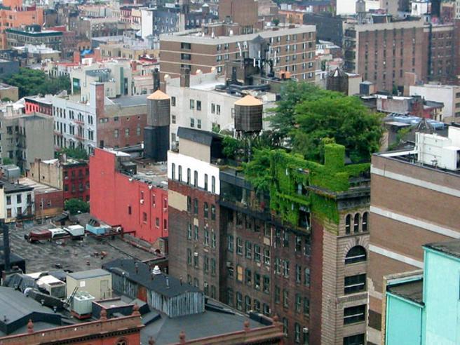 Área verde em uma cobertura de Nova Iorque