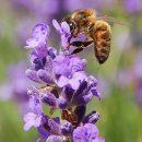 Vamos falar sobre abelhas