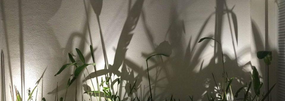 A Iluminação de um Jardim