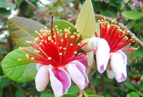 Plantas que aceitam bem a onda de frio no Brasil