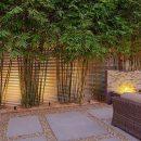 Como usar um bambu não invasivo no paisagismo