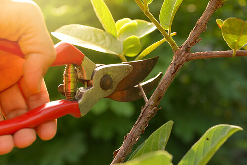 Os erros cometidos na jardinagem e paisagismo
