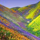 O Florido Vale da Morte