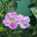 Flores que atraem beija-flores